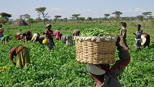 Farmers-2.jpg