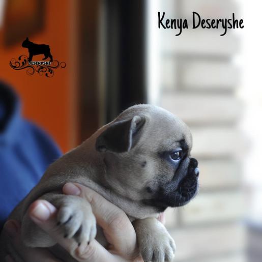KENYA DESERYSHE-FEMALE