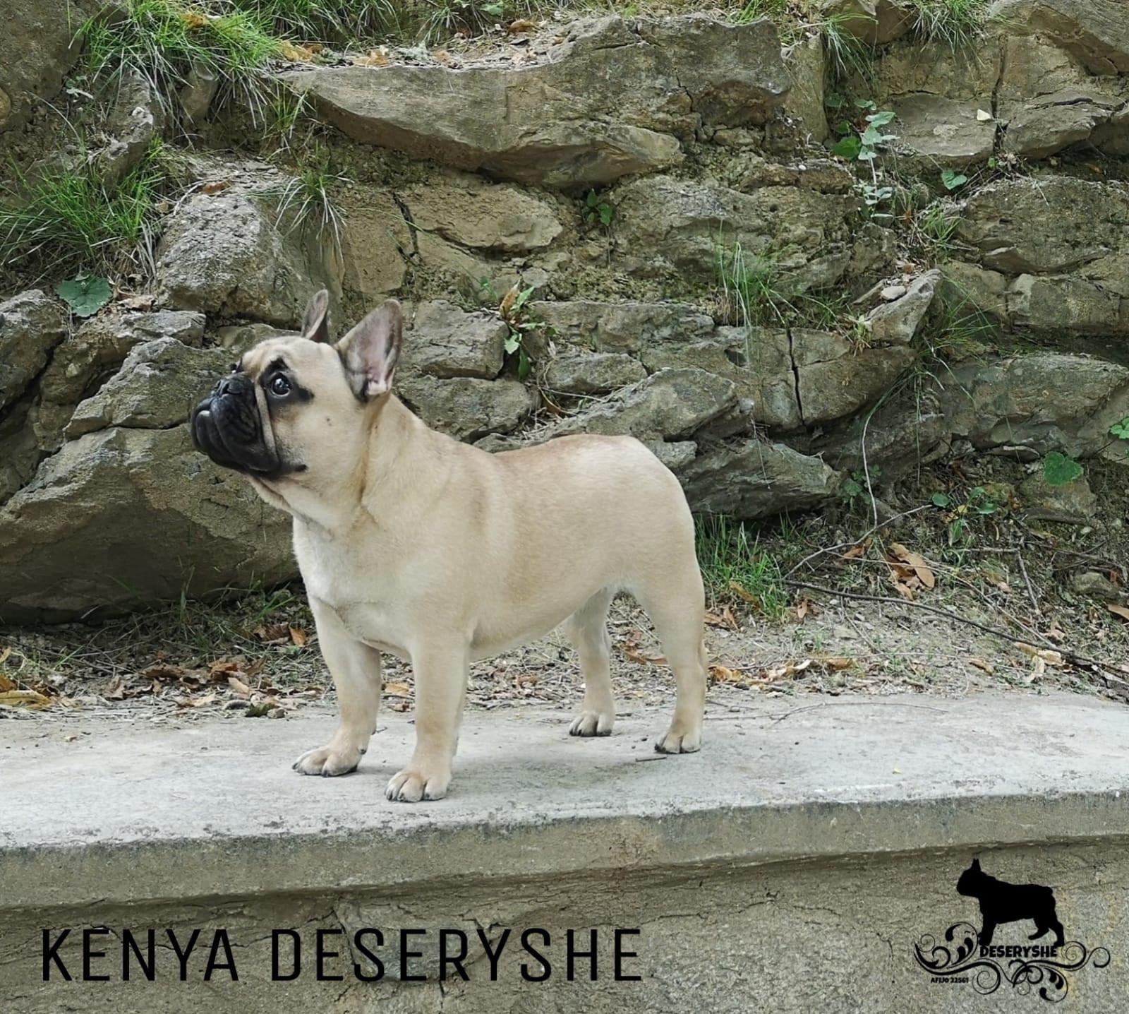 KENYA DESERYSHE- 10 MESES