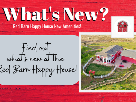 What's New at the Barn?