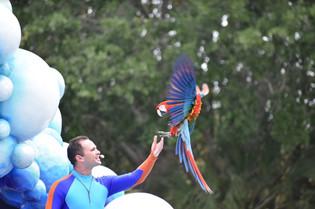 Parrot Landing.JPG