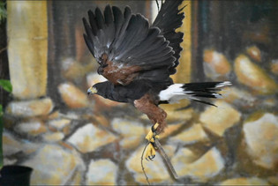Pamona in Flight.JPG