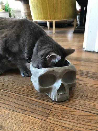Skull Dish