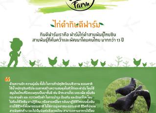 ไก่ดำ กินดีฟาร์ม | ไก่ดำปลอดสารพิษ เลี้ยงด้วยสมุนไพรไทย 5 ชนิด แข็งแรงโดยไม่พึ่งวัคซีน, ฮอร์โมน และส
