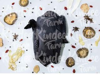 ไก่ดำ ไก่กระดูกดำ กินดีฟาร์ม