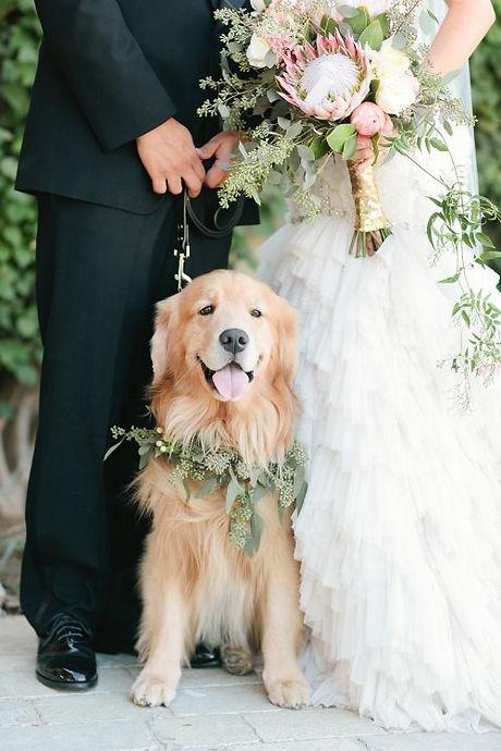 Wedding Dog.jpg