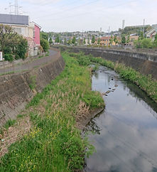 DSC_0488_自宅近くの鶴見川_戸井撮影.JPG