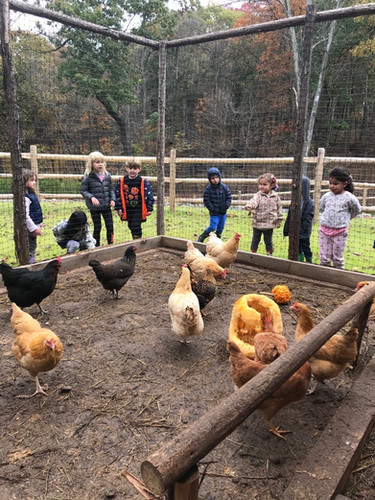 children checking on the chickens