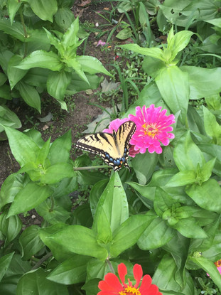 a large butterfly on a flower