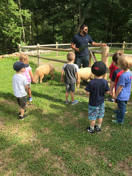 children petting the sheep