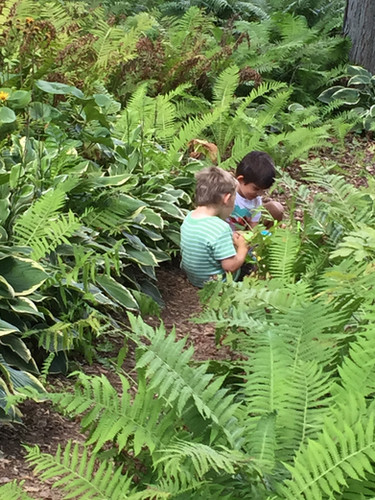 two boys exploring a trail