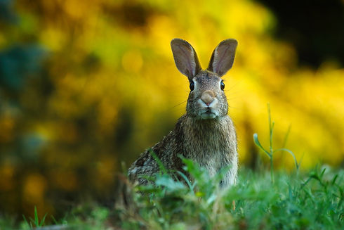 close-up-of-rabbit-on-field-247373.jpg