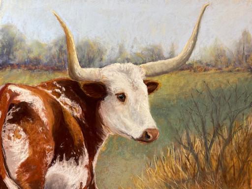 Kentucky Longhorn Tammy Cox