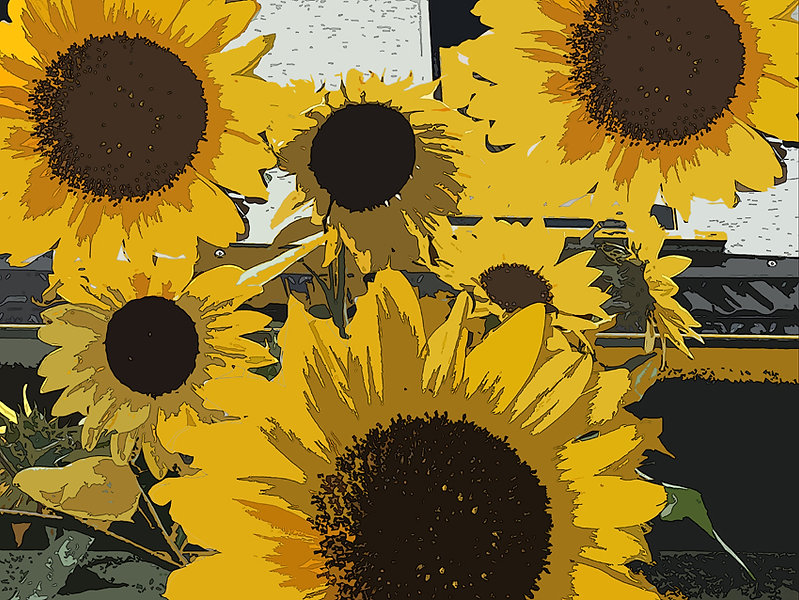 sunflowers2 72 dpi.jpg