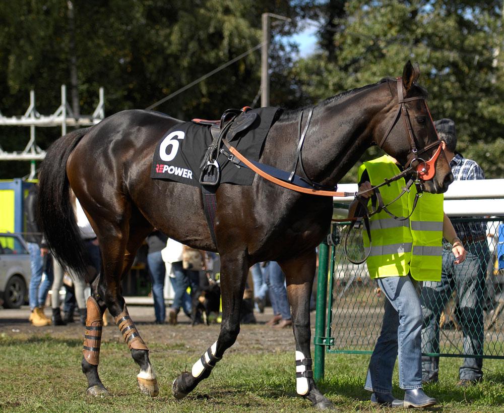 Pferderennen Maisfeld