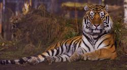 Gossau Zoo