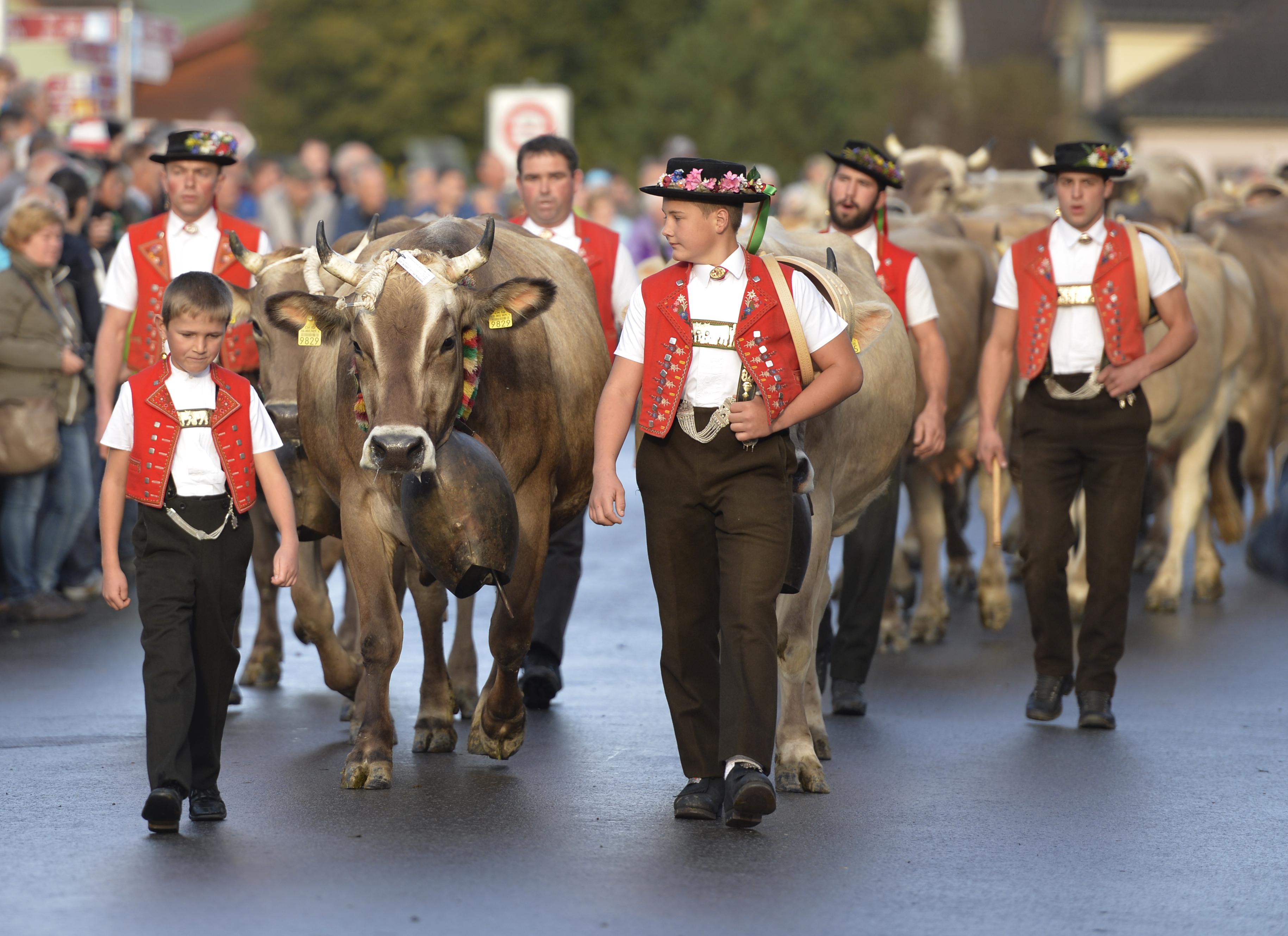 Viehschau Appenzell