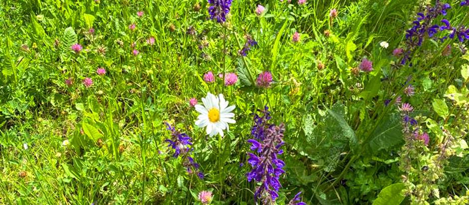 Wiesenmanagement im Garten: Rasen vs. Naturwiese
