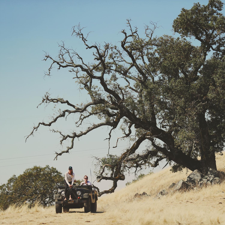tree-jeep