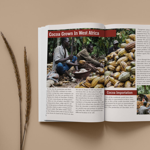 Cocoa being grown page
