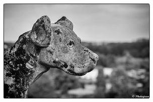 "Thème ""Photo animalière"""
