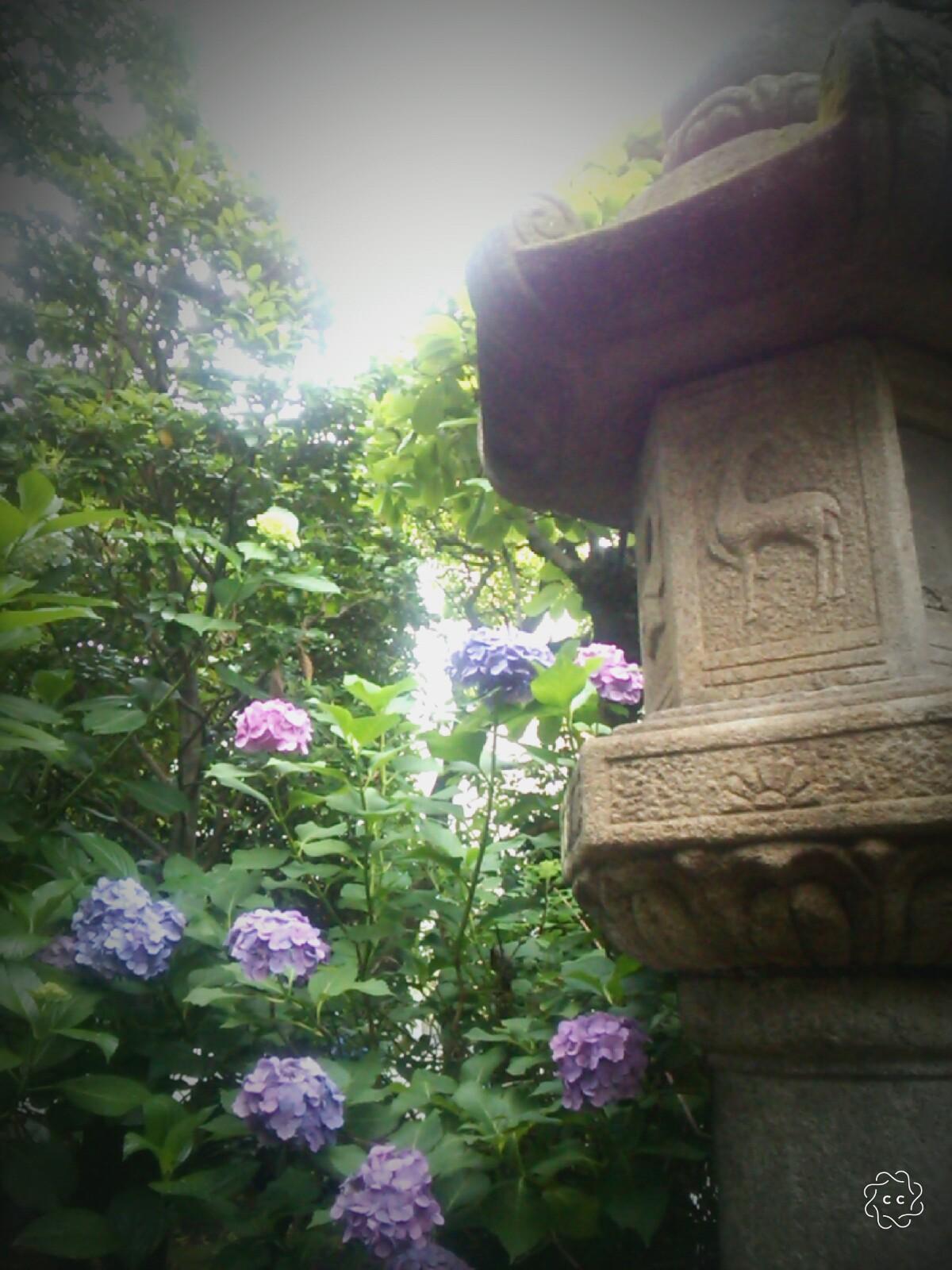 紫陽花と石灯篭
