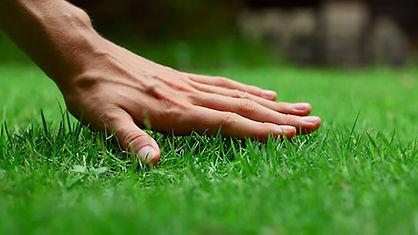 lawn, lawn fertilization, pest, pest control, insect, insect control
