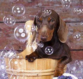 Dog Spa Bath