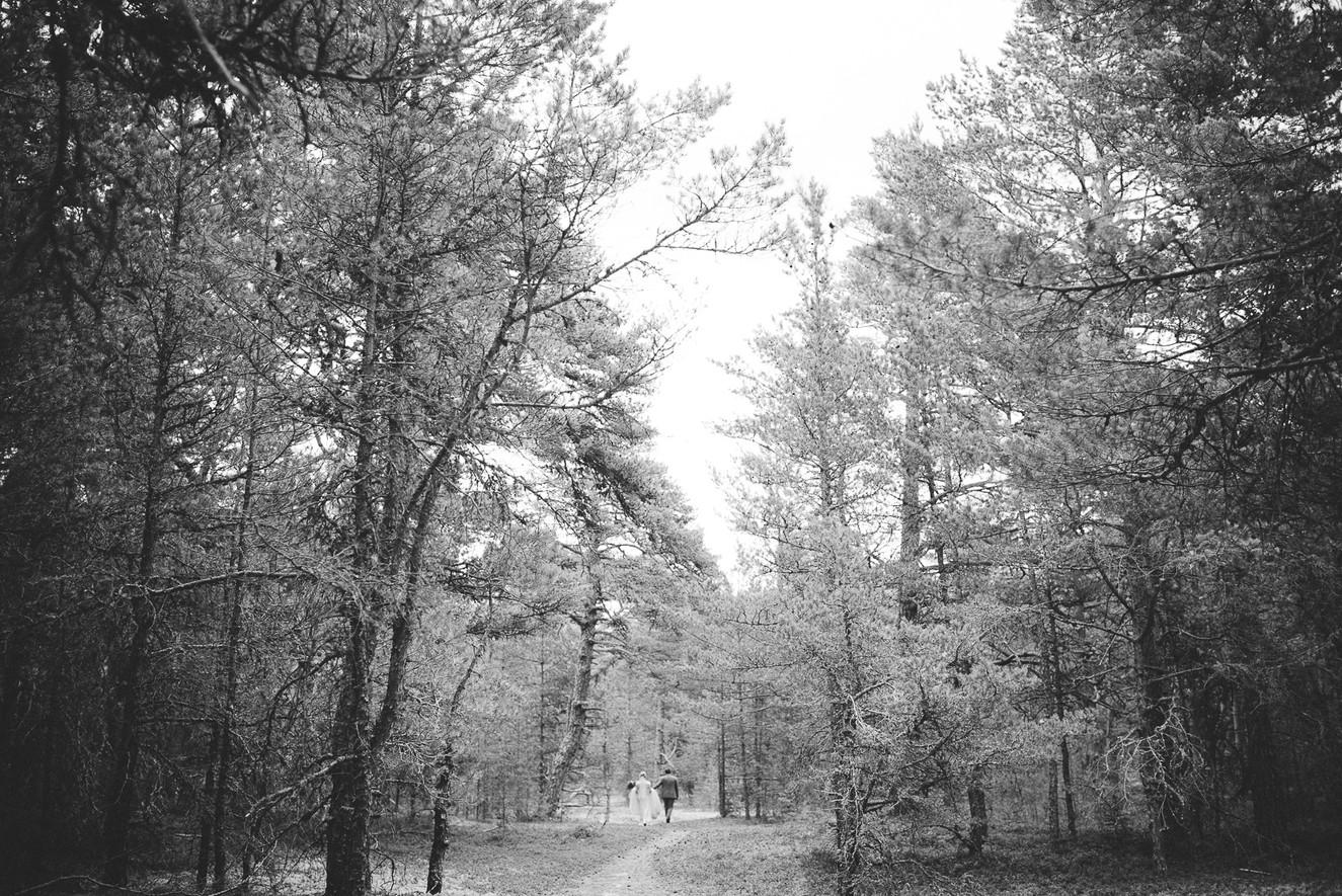 pruutpaar-metsas