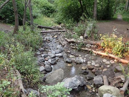 Project Tribute & Update – Shaganappi Creek Restoration Project