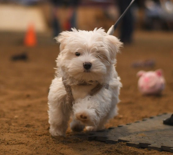 Perfect Puppy Foundations, Sat 12.30pm