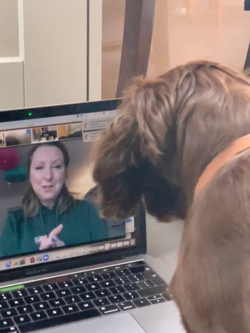Puppy studying dog trainer on laptop