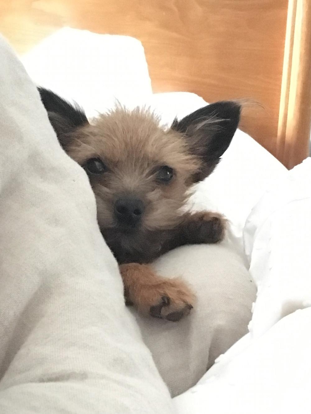 HotDog Training's tips for settling your puppy overnight