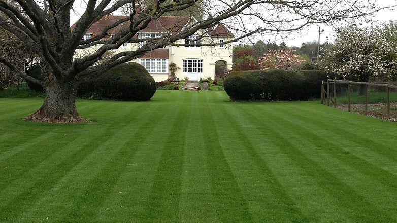 lawn tree.jpg