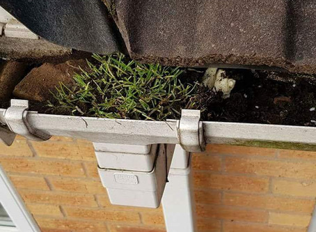 Dripping Gutters?