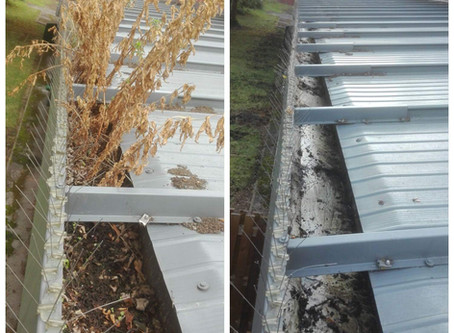 IS RAIN WATER BETTER FOR YOUR PLANTS ?