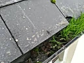 Why Maintain Your Gutters grass in gutter - Gutter Cleaning Nottingham