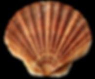 Screen_Shot_2020-07-29_at_11-removebg-pr