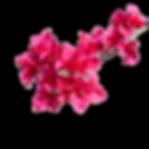 beautiful-pink-bougainvillea-flowers_510