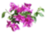 flower2-removebg-preview.png