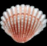 Screen_Shot_2020-07-29_at_10-removebg-pr