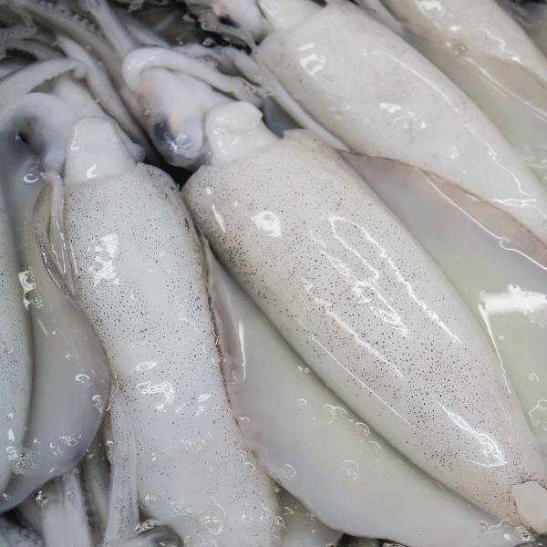 Squid_FarmVision