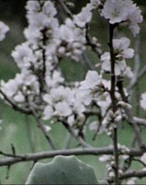 Hic Rosa, Partition Botanique