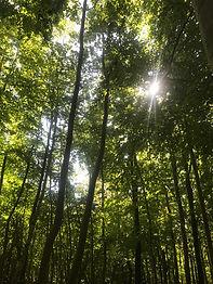 croydon woods.jpg