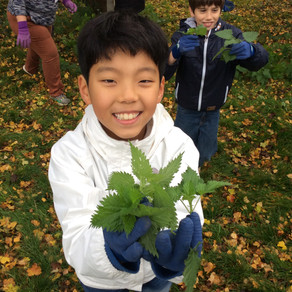 Lockdown family activities: Top tips for foraging with children