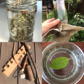 Online nature and bushcraft sessions for children