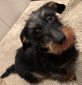 """""""Magda is super friendly and helpfull! She has a lot of patience and gives many tips. I would recommend her. She is also very up to date and keeps contact during the proces to evaluate the progress. She combines her love and knowlodge for dogs to help your problem situation"""" Pia V."""