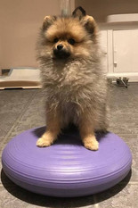 """""""Baloe is 3 months old. Very energetic and stubborn.   Maddie's classes have been helping us a lot. We are very glad with the results. She is very professional and sweet with our puppy.  Thank you so much 😊"""" Laylla S."""