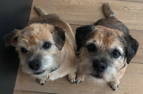 """""""Magda is absolutely loved by our two dogs and us. She walks and entertains the two as if they were her own, additionally she's always looking for new ways to stretch our wuffs Certainly recommend her but hope in doing so she still has time for us ❤️"""" Sarah M."""