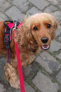 """""""Thx Magda for your walks with Ruby! 🐾🐾"""" Sofie D."""